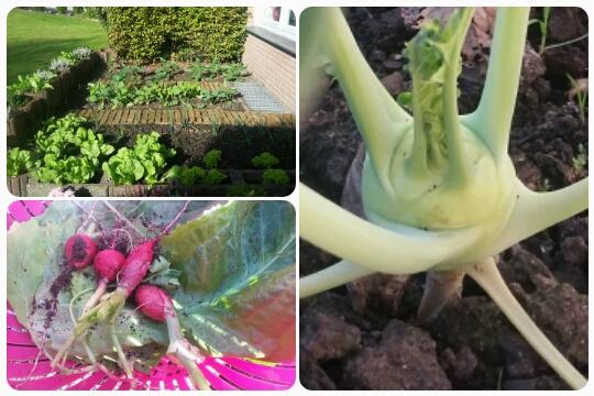 Mein Gemüsebeet im Überblick // die eigene Ernte // ein Baby-Kohlrabi